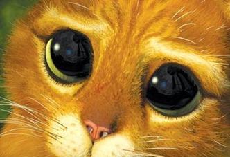 gato-shrek